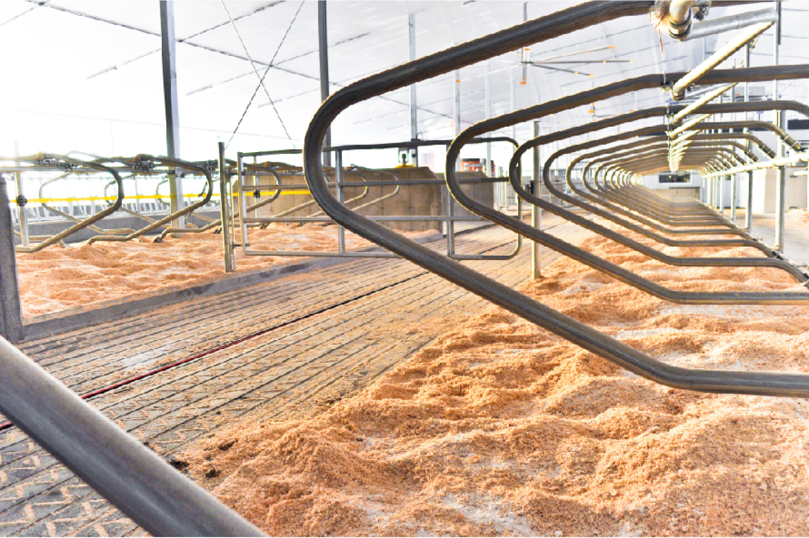 logette vache laitière installation agricole / Équipements PFB