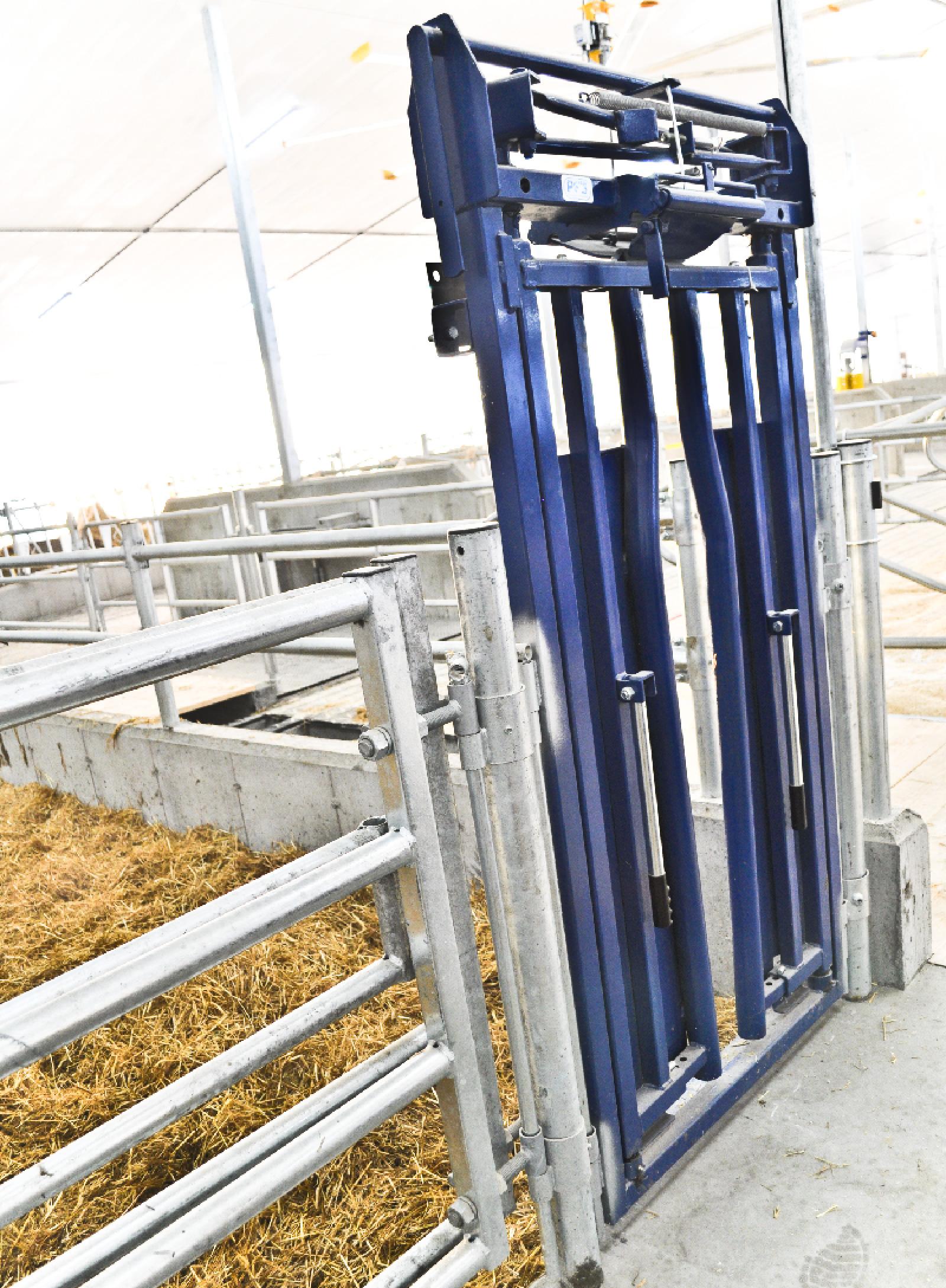 barrière carcan vache laitière installation agricole / Équipements PFB