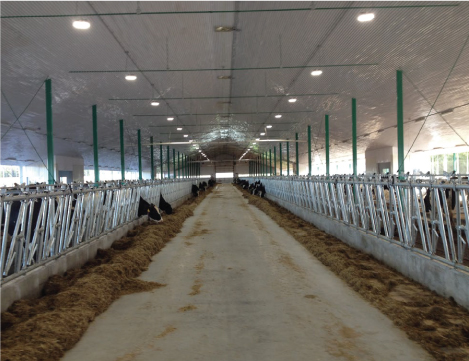 mangeoires carcans animaux installation pour ferme production animal