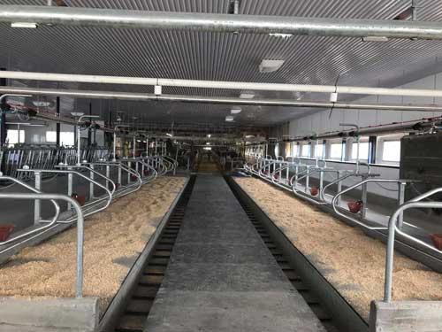 stalle étable vache laitière installation agricole / Équipements PFB