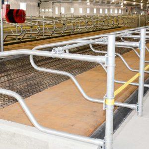 étable vache laitière logette avec barrière