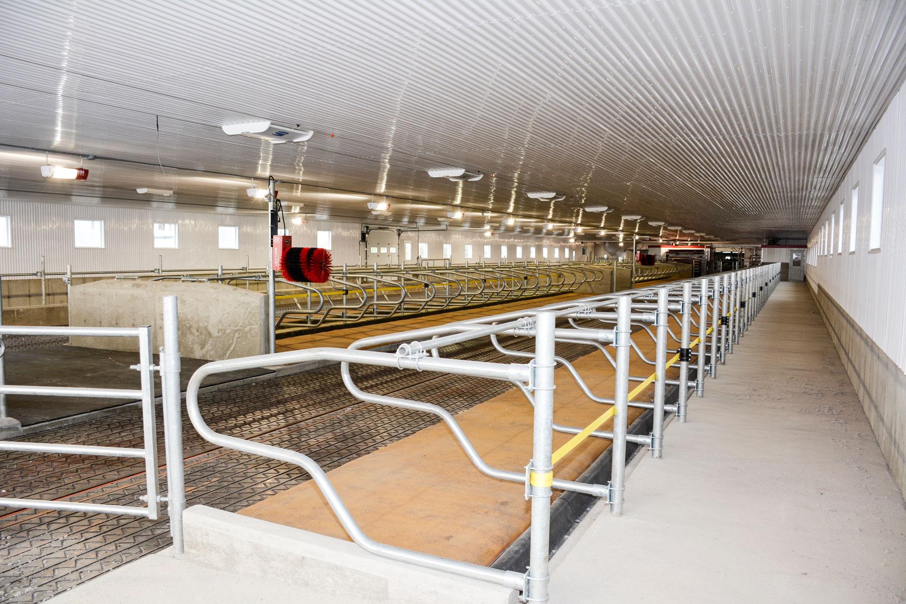 installation agricole vache laitière logette courroie avant logette / Équipements PFB
